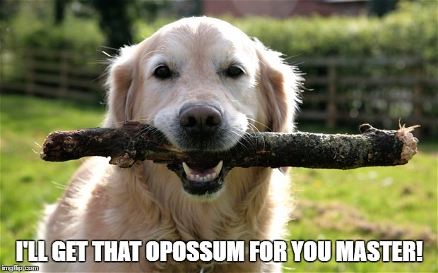 I'LL GET THAT OPOSSUM FOR YOU MASTER! | made w/ Imgflip meme maker