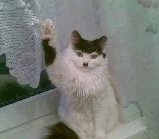 Image result for HITLER CAT