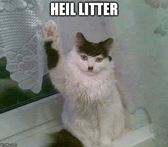 What Is Cat Litter Made Of