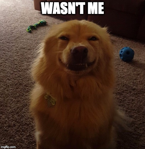 Wasn't Me | WASN'T ME | image tagged in funny memes,funny dogs,funny animals,smiling dog,wasn't me | made w/ Imgflip meme maker