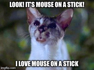 It's Mouse On A Stick! | LOOK! IT'S MOUSE ON A STICK! I LOVE MOUSE ON A STICK | image tagged in lucky,memes,siamese cat,stuart little | made w/ Imgflip meme maker