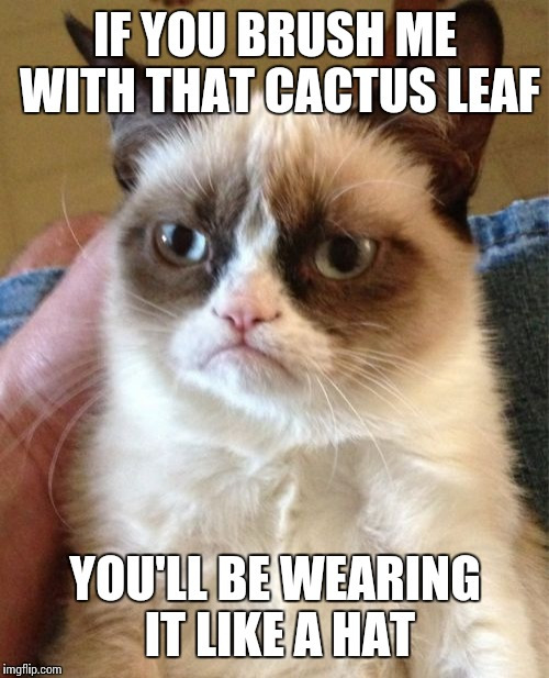 Grumpy Cat Meme | IF YOU BRUSH ME WITH THAT CACTUS LEAF YOU'LL BE WEARING IT LIKE A HAT | image tagged in memes,grumpy cat | made w/ Imgflip meme maker