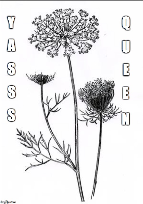 YASS QUEEN | Y A S S S Q U E E N | image tagged in plants,sass | made w/ Imgflip meme maker