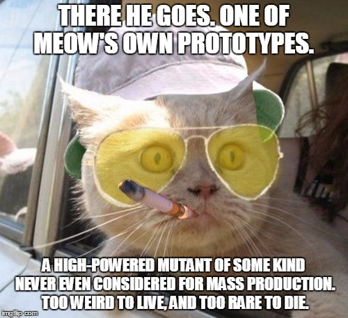 fear and loathing kitty | THERE HE GOES. ONE OF MEOW'S OWN PROTOTYPES. A HIGH-POWERED MUTANT OF SOME KIND NEVER EVEN CONSIDERED FOR MASS PRODUCTION. TOO WEIRD TO LIVE | image tagged in fear and loathing kitty | made w/ Imgflip meme maker