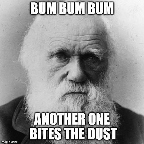 BUM BUM BUM ANOTHER ONE BITES THE DUST | image tagged in darwin | made w/ Imgflip meme maker