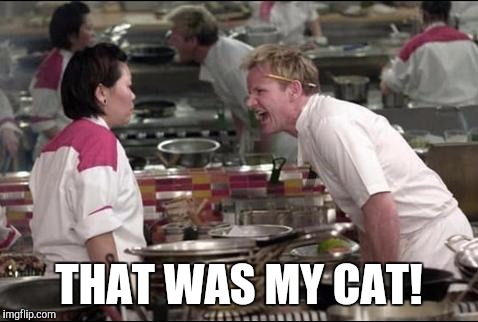 Angry Chef Gordon Ramsay | THAT WAS MY CAT! | image tagged in memes,angry chef gordon ramsay | made w/ Imgflip meme maker