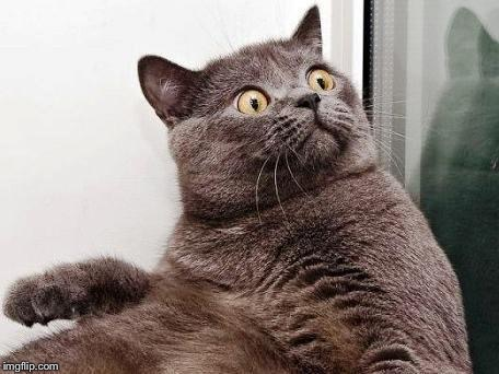 surprised cat | . | image tagged in surprised cat | made w/ Imgflip meme maker