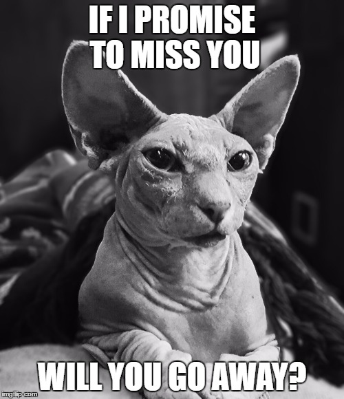 Go Away MrFluffyBoatHag | IF I PROMISE TO MISS YOU WILL YOU GO AWAY? | image tagged in miss you,go away,hairless,cat | made w/ Imgflip meme maker