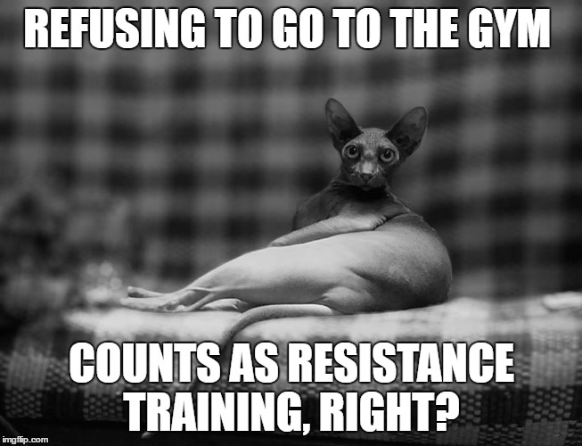 No gym MrFluffyBoatHag | REFUSING TO GO TO THE GYM COUNTS AS RESISTANCE TRAINING, RIGHT? | image tagged in gym,exercise,training,hairless,cat,fat | made w/ Imgflip meme maker