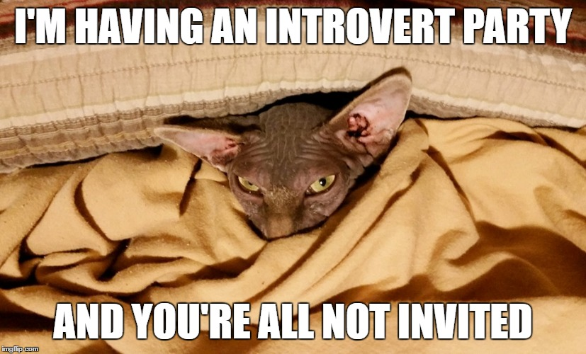 Introvert MrFluffyBoatHag | I'M HAVING AN INTROVERT PARTY AND YOU'RE ALL NOT INVITED | image tagged in introvert,hairless,cat,party,invited,declined | made w/ Imgflip meme maker