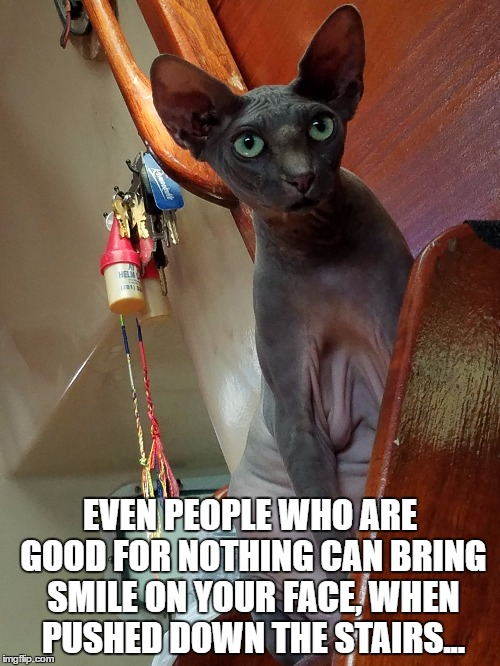 Good for nothing MrFluffyBoatHag | EVEN PEOPLE WHO ARE GOOD FOR NOTHING CAN BRING SMILE ON YOUR FACE, WHEN PUSHED DOWN THE STAIRS... | image tagged in insult,stairs,good for nothing,hairless cat,hairless,cat | made w/ Imgflip meme maker