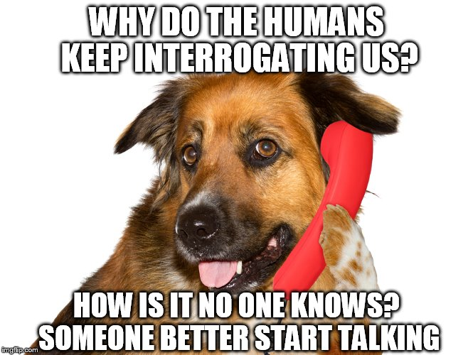 WHY DO THE HUMANS KEEP INTERROGATING US? HOW IS IT NO ONE KNOWS? SOMEONE BETTER START TALKING | image tagged in dog on the phone | made w/ Imgflip meme maker