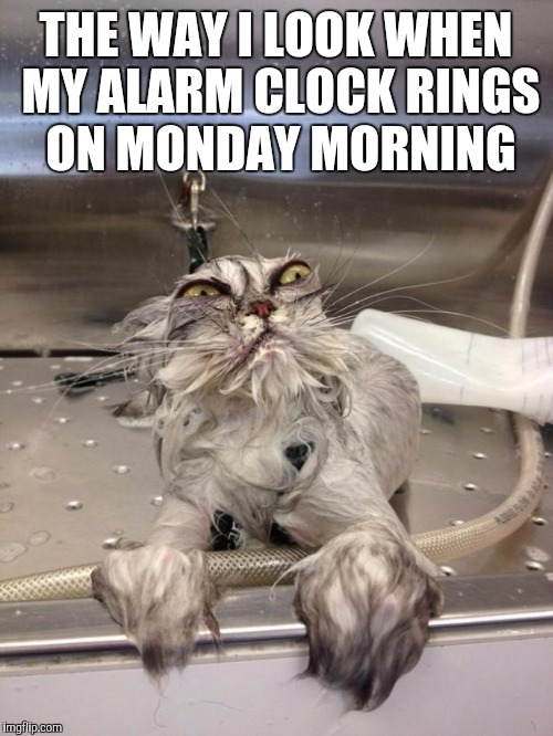 Dear photo diary | THE WAY I LOOK WHEN MY ALARM CLOCK RINGS ON MONDAY MORNING | image tagged in angry wet cat,work | made w/ Imgflip meme maker