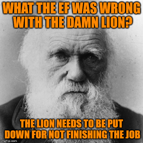 WHAT THE EF WAS WRONG WITH THE DAMN LION? THE LION NEEDS TO BE PUT DOWN FOR NOT FINISHING THE JOB | image tagged in darwin | made w/ Imgflip meme maker