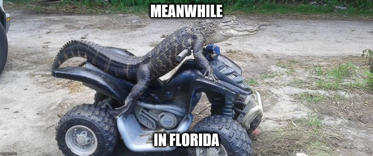 Meanwhile in Florida |  MEANWHILE; IN FLORIDA | image tagged in meanwhile in florida,florida,gator,summer,danger | made w/ Imgflip meme maker