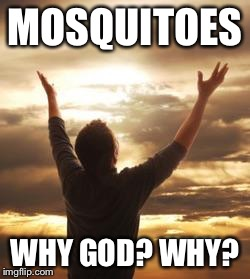 Why God? Why? | MOSQUITOES WHY GOD? WHY? | image tagged in why god why,memes,summer,mosquitoes,summer time | made w/ Imgflip meme maker