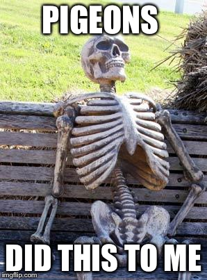 Waiting Skeleton Meme | PIGEONS DID THIS TO ME | image tagged in memes,waiting skeleton | made w/ Imgflip meme maker