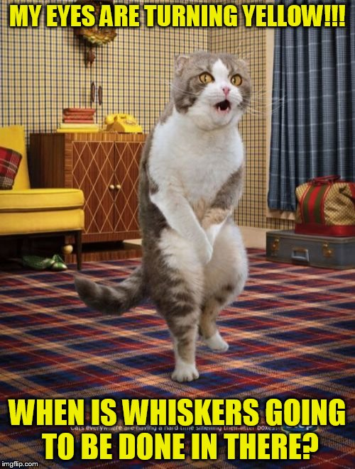 Gotta go, gotta go, gotta go | MY EYES ARE TURNING YELLOW!!! WHEN IS WHISKERS GOING TO BE DONE IN THERE? | image tagged in memes,gotta go cat,burning the third meme,not a happy dance,what ugly carpet | made w/ Imgflip meme maker