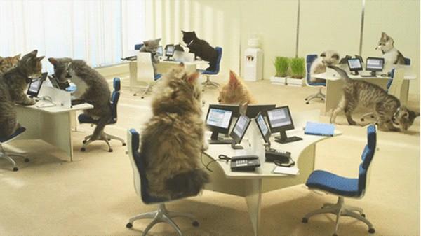 Cat Office Meme Generator Imgflip
