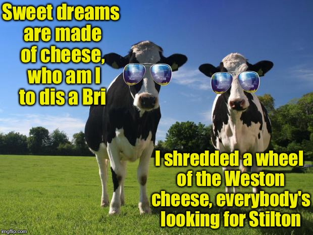 Inspired by a post from Dutchess County Fairgrounds | Sweet dreams are made of cheese,  who am I to dis a Bri I shredded a wheel of the Weston cheese, everybody's looking for Stilton | image tagged in cool cows,cheese | made w/ Imgflip meme maker