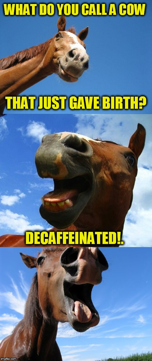 Just Horsing Around | WHAT DO YOU CALL A COW DECAFFEINATED!. THAT JUST GAVE BIRTH? | image tagged in just horsing around,cow,jokes,funny meme,laughs,funny memes | made w/ Imgflip meme maker