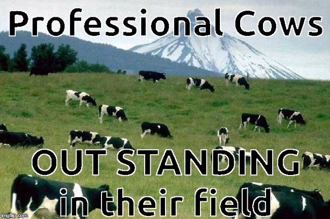 6COWS FIELDING QUESTIONS | made w/ Imgflip meme maker