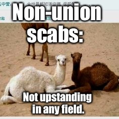 As opposed to those upstanding in their field. | Non-union scabs: Not upstanding in any field. | image tagged in meme,upstanding,field,non-union,scab,camel | made w/ Imgflip meme maker