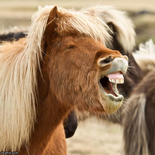 laughing animal wallpaper - photo #39