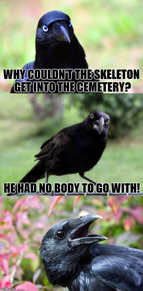 Bad Pun Crow | WHY COULDN'T THE SKELETON GET INTO THE CEMETERY? HE HAD NO BODY TO GO WITH! | image tagged in bad pun crow,memes,funny,bad pun,cemetery,crow | made w/ Imgflip meme maker
