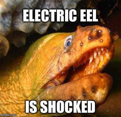 What Happened? | ELECTRIC EEL IS SHOCKED | image tagged in electric,sadly i am only an eel | made w/ Imgflip meme maker