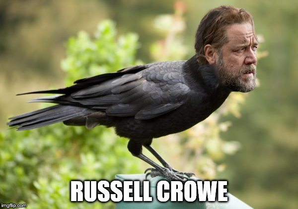 RUSSELL CROWE | image tagged in funny memes,russell crowe | made w/ Imgflip meme maker