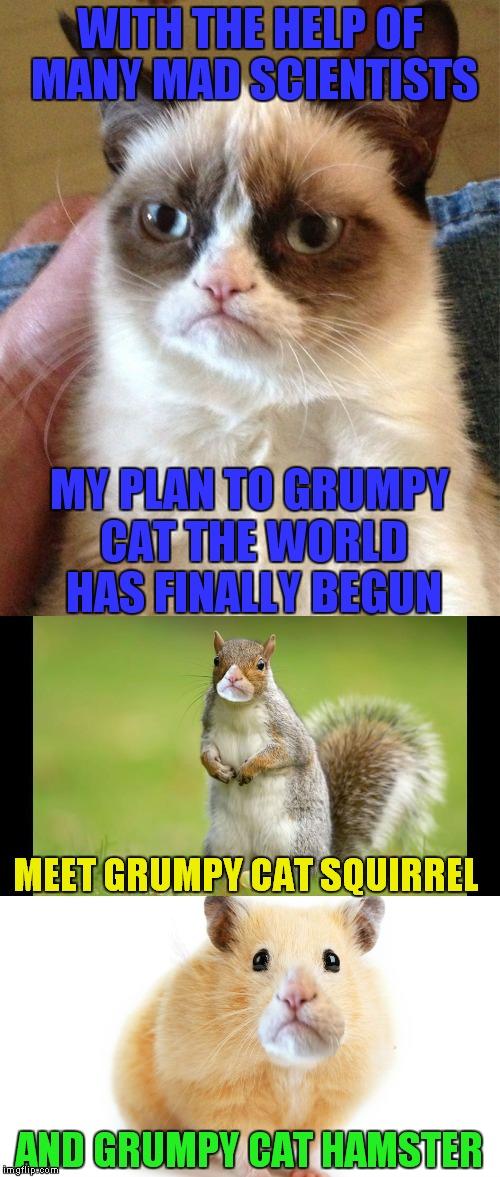 Cat Mad World Meme