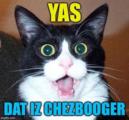 whoa cat | YAS DAT IZ CHEZBOOGER | image tagged in whoa cat | made w/ Imgflip meme maker