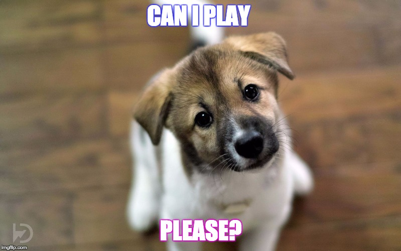 Cute Dog  | CAN I PLAY PLEASE? | image tagged in dog memes,animal memes,memes,funny,cute | made w/ Imgflip meme maker