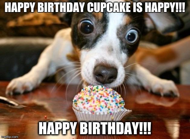 Funny Dog Meme Images : Happy birthday cupcake dog imgflip