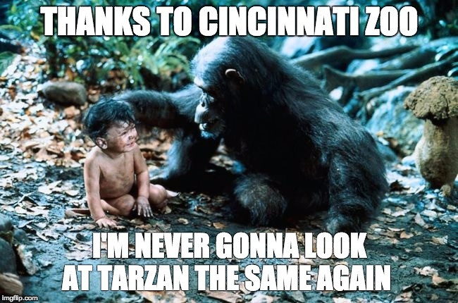 THANKS TO CINCINNATI ZOO I'M NEVER GONNA LOOK AT TARZAN THE SAME AGAIN | image tagged in harambe,cincinnati zoo,tarzan | made w/ Imgflip meme maker