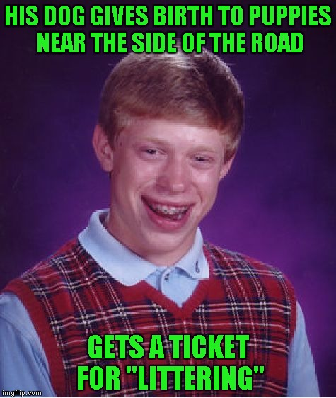 "Bad Luck Brian Meme | HIS DOG GIVES BIRTH TO PUPPIES NEAR THE SIDE OF THE ROAD GETS A TICKET FOR ""LITTERING"" 