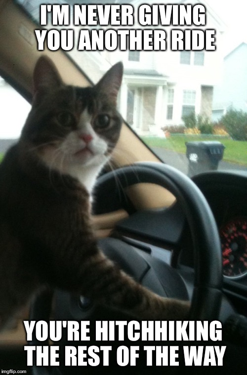 I'M NEVER GIVING YOU ANOTHER RIDE YOU'RE HITCHHIKING THE REST OF THE WAY | image tagged in jojo the driving cat | made w/ Imgflip meme maker