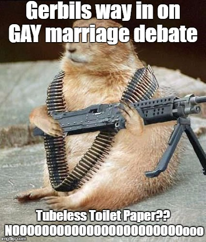 Gerbils way in on Gay Marriage Debate  | Gerbils way in on GAY marriage debate Tubeless Toilet Paper?? NOOOOOOOOOOOOOOOOOOOOOOOooo | image tagged in lemmywinks gerbil gay rights | made w/ Imgflip meme maker