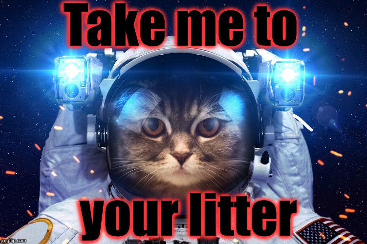 The Aliens might be closer than you ever thought...... | Take me to your litter | image tagged in space cat 2,memes,evilmandoevil,funny | made w/ Imgflip meme maker