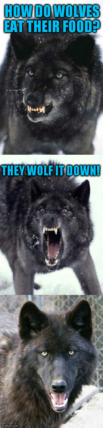 Bad Pun Insanity Wolf (A pinheadpokemanz Template) | HOW DO WOLVES EAT THEIR FOOD? THEY WOLF IT DOWN! | image tagged in bad pun insanity wolf,funny memes,jokes,wolf,food,laughs | made w/ Imgflip meme maker