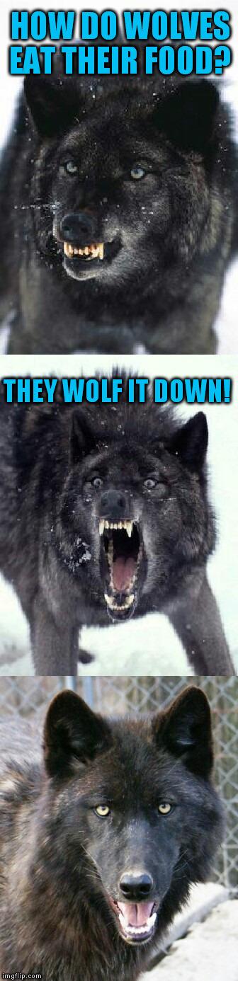 bad pun insanity wolf a pinheadpokemanz template imgflip