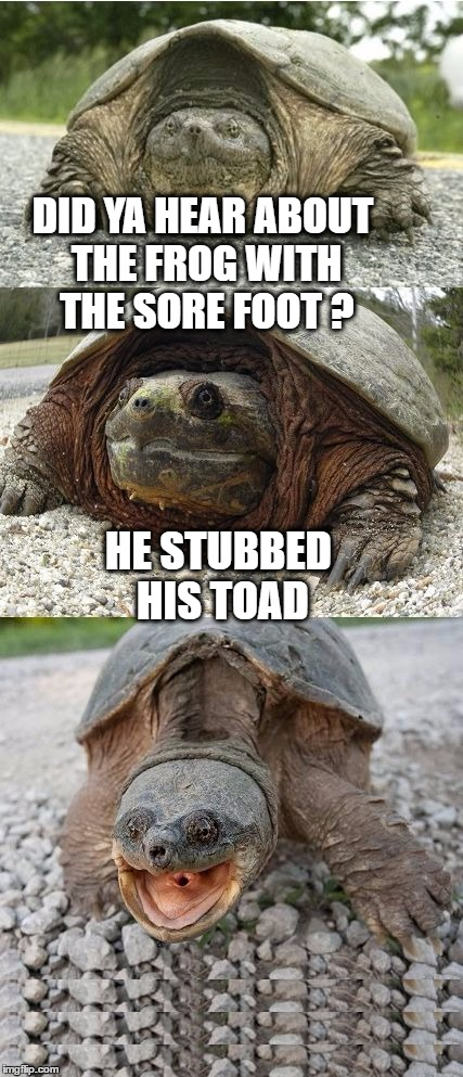 Trippin' frog | DID YA HEAR ABOUT THE FROG WITH THE SORE FOOT ? HE STUBBED HIS TOAD | image tagged in bad pun tortoise,memes,bad pun,toad,frog,stub | made w/ Imgflip meme maker