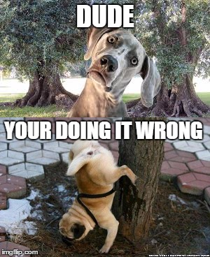 You won't believe what I saw today! | DUDE YOUR DOING IT WRONG | image tagged in dogs | made w/ Imgflip meme maker