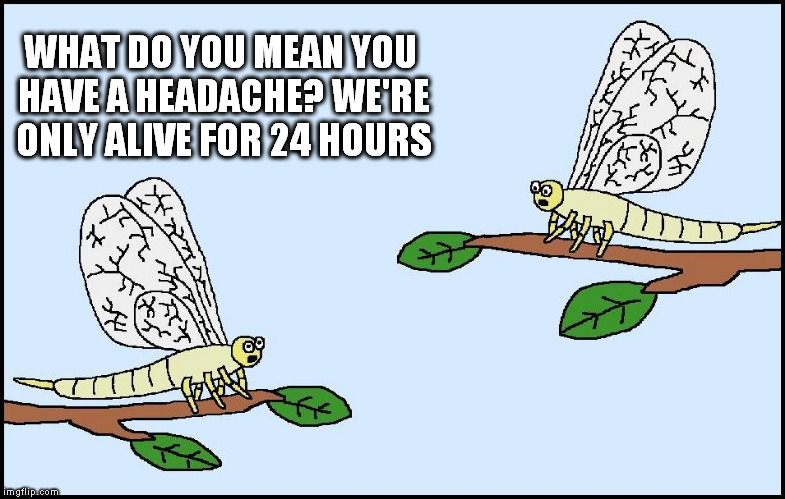 Mayflys - The struggle is real | WHAT DO YOU MEAN YOU HAVE A HEADACHE? WE'RE ONLY ALIVE FOR 24 HOURS | image tagged in memes,headache | made w/ Imgflip meme maker
