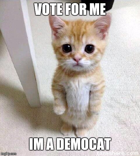 Or could be a RepubliCat..... |  VOTE FOR ME; IM A DEMOCAT | image tagged in memes,cute cat | made w/ Imgflip meme maker
