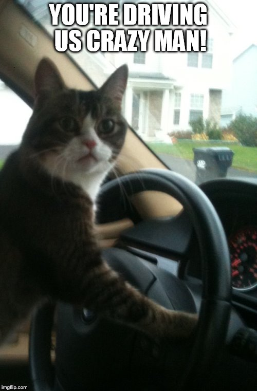 YOU'RE DRIVING US CRAZY MAN! | image tagged in jojo the driving cat | made w/ Imgflip meme maker