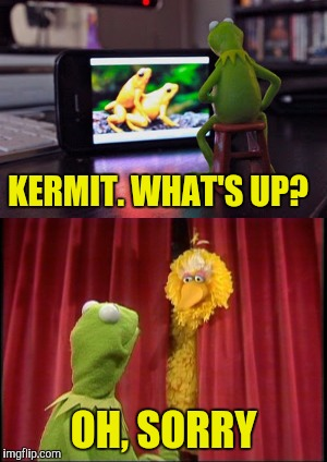 Embarrassing! | KERMIT. WHAT'S UP? OH, SORRY | image tagged in kermit the frog | made w/ Imgflip meme maker