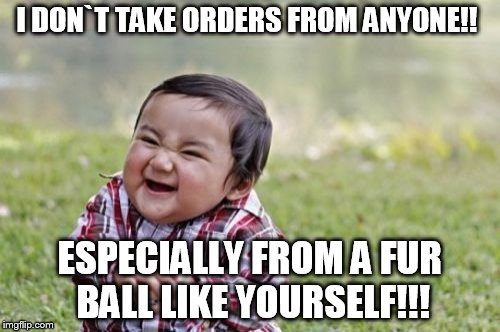 I DON`T TAKE ORDERS FROM ANYONE!! ESPECIALLY FROM A FUR BALL LIKE YOURSELF!!! | image tagged in memes,evil toddler | made w/ Imgflip meme maker