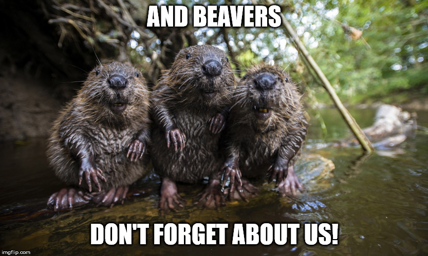 AND BEAVERS DON'T FORGET ABOUT US! | made w/ Imgflip meme maker